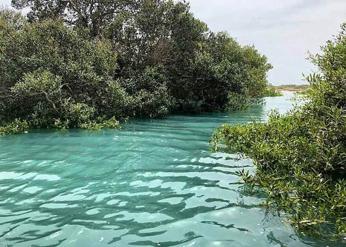 Dangerous Places in Iran - Qeshm Mangroves