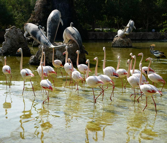 kish island - kish attractions - kish island birds park